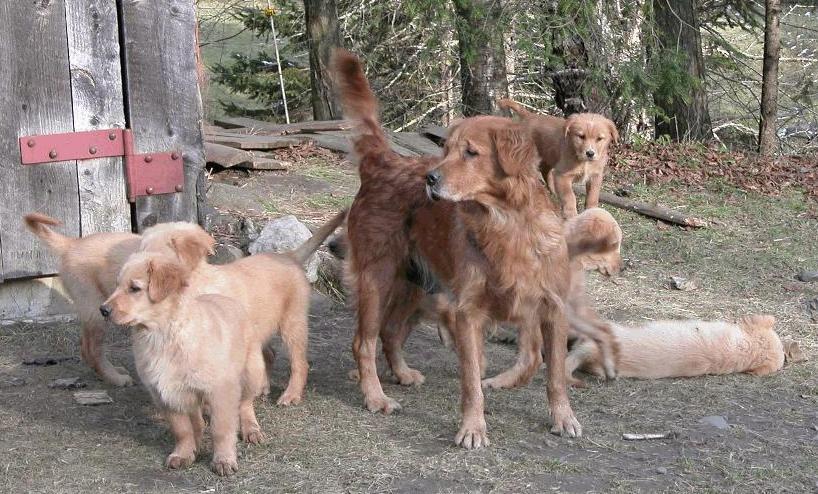 Heidi and Pups