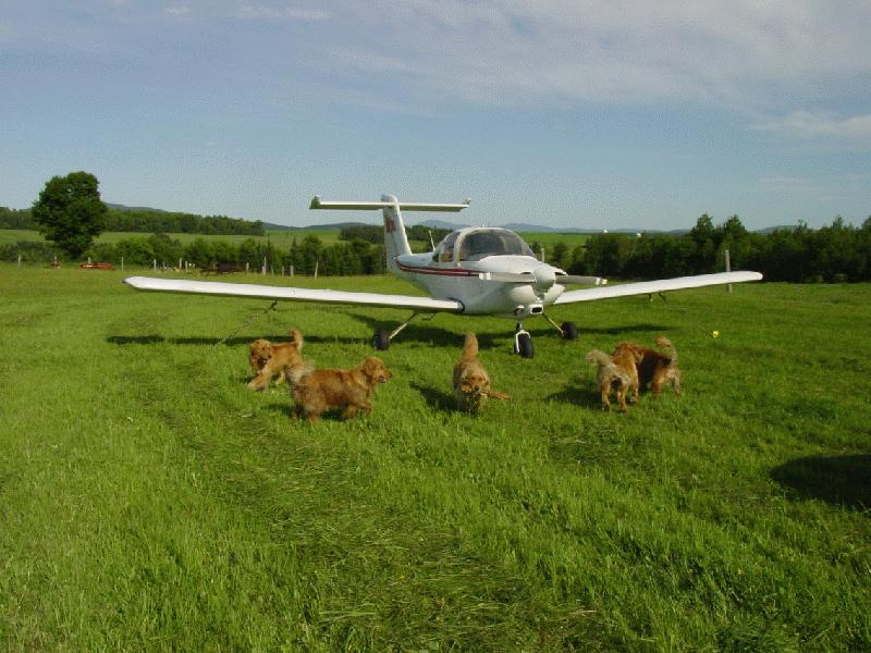 Pictures the weller farm for Small dogs on airplanes
