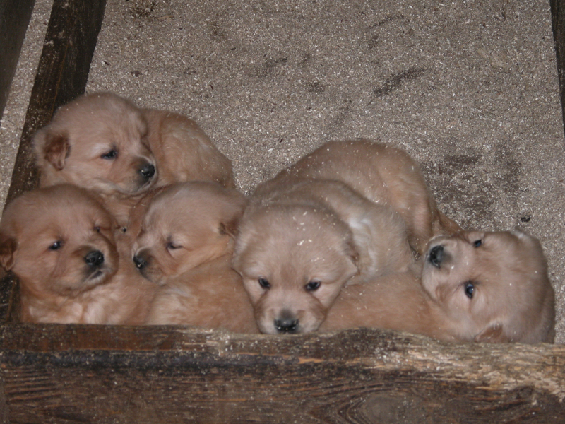April 16 2012 Heidis pups0001 small view